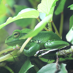 Our zoo has a unique vivarium where many rare amphibians can be seen.